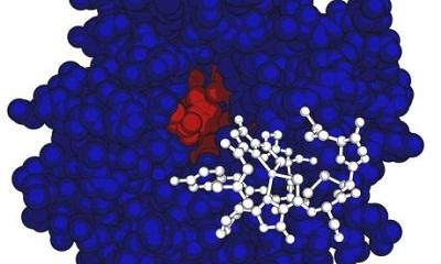 Vi khuẩn methanotrophic tiêu thụ khí nhà kính nhờ protein